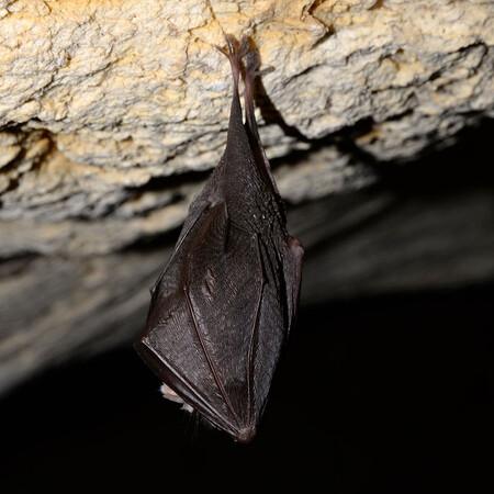 Netopýrům se v jeskyni Na Turoldu líbí, přezimuje jich tam více