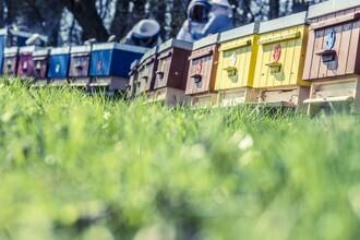 Čeští včelaři dlouhodobě upozorňují na potřebu modernizovat své včelařské zázemí.