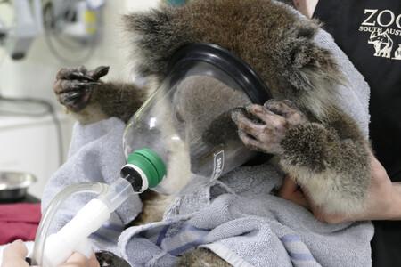 Miroslav Bobek: Zázraky se ještě dějí. Částka poskytnutá Čechy skrze zoo do Austrálie se blíží 15 milionům korun