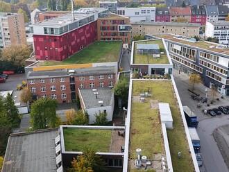 Do roku 2024 má mít Hamburk 100 hektarů zelených střech.