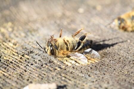 Dvojice braniborských včelařů včera na protest proti agrární politice německé vlády složila před berlínským sídlem ministerstva zemědělství dvě a půl tuny medu kontaminovaného glyfosátem, část včelího produktu pak vylila na schody budovy. / Ilustrační foto