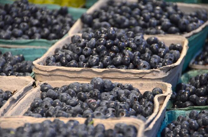 Na rozdíl od dovozového ovoce se zákazník může k hovoranským borůvkám dostat v obchodě už druhý den po utržení, všechny borůvky vyexpedují do čtyř dnů. Ïlustrační foto