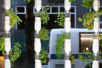 Vertikální zahrada ale nemusí být nutně jen v bytě. Okna jsou i v kancelářích nebo obchodech.