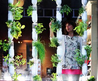 Bez okopovávání a plení. Hydroponické pěstování vlastní zeleniny ve vlastním okně.