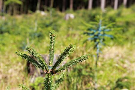 """""""Už tím, že zasadíte třeba jedinou sazeničku, vyjádříte svou podporu a zájem o obnovu lesů v České republice,"""" vzkazuje Josef Vojáček."""