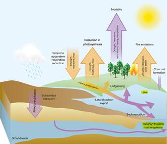 Suchozemský uhlíkový cyklus. Šipky směřující vzhůru představují dodatečný oxid uhličitý přidávaný do atmosféry, zatímco šipky dolů ukazují, že uhlík je z atmosféry odstraňován mnohem pomaleji. Žlutá barva ukazuje krátkodobé, zatímco fialová dlouhodobé působení.