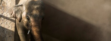 Slon Kaavan Foto: FOUR PAWS International / Facebook