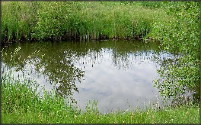Dodala, že v budoucnu by v místě měla přibýt také soustava tůněk, které by zmírnily erozi břehů potoka. Ilustrační foto