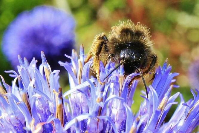 Nektar sbírají včely přímo v areálu FN Olomouc a jeho blízkém okolí. Ilustrační foto