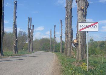 ožezané stromy