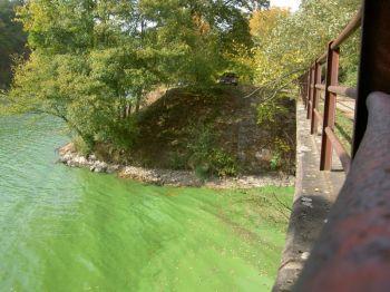 Znečištěná voda v Brněnské přehradě.