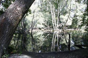 Lužní les u Gabčíkova