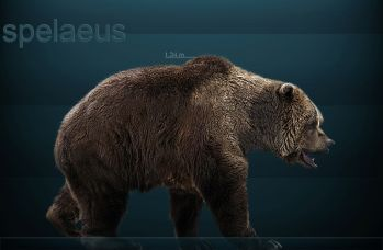 Medvěd jeskynní (Ursus spelaeus).