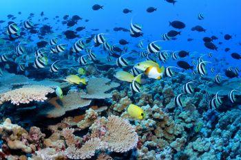 Korálový útes u břehů Havaje.