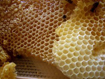 Včely v prázdných voskových plástech.