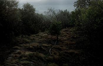 Michal Šeba: Hadice, c-print, diasec, 180 x 283 cm, 2007