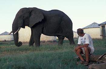 Slon v parku Kidepo Valley