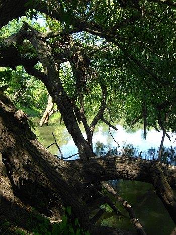 Jedno ze slepých ramen řeky Moravy v oblasti, kde chce MŽP vyhlásit CHKO Soutok