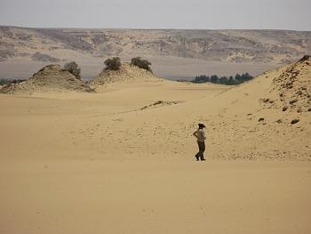 Vegetační pahrbky zvané agúly v egyptské Západní poušti