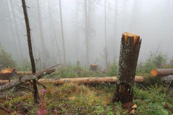 Trojmezenský prales na Šumavě