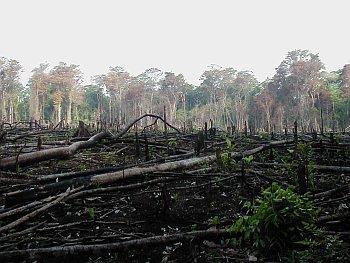 Les catastrophes naturelles menacent les forêts